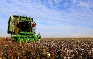 """Türkiye'nin pamuk ihtiyacının yarısına yakınının karşılandığı Şanlıurfa'da, çiftçiler, ürün fiyatlarının beklenenin altında açıklanması nedeniyle sıkıntı yaşıyor. Ekim alanları her geçen yıl artan Harran Ovası'nda üretilen pamuk, lifiyle tekstil, çiğidiyle yağ sanayisine, küspesiyle de hayvancılık sektörüne ciddi oranda ham madde sağlıyor. Kozasından çiçek açımına kadar her evresinde tarlada görsel şölen sunan ve bölgede """"beyaz altın"""" olarak nitelendirilen pamuk, sağladığı avantajla Türkiye'nin dünyada """"tekstil devi"""" olması yolunda katkı sunuyor. Bölgede sezonun son pamuğu toplanmaya devam ediyor.  (Ali İhsan Öztürk - Anadolu Ajansı)"""
